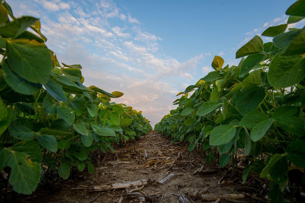 South Dakota Soybean Production