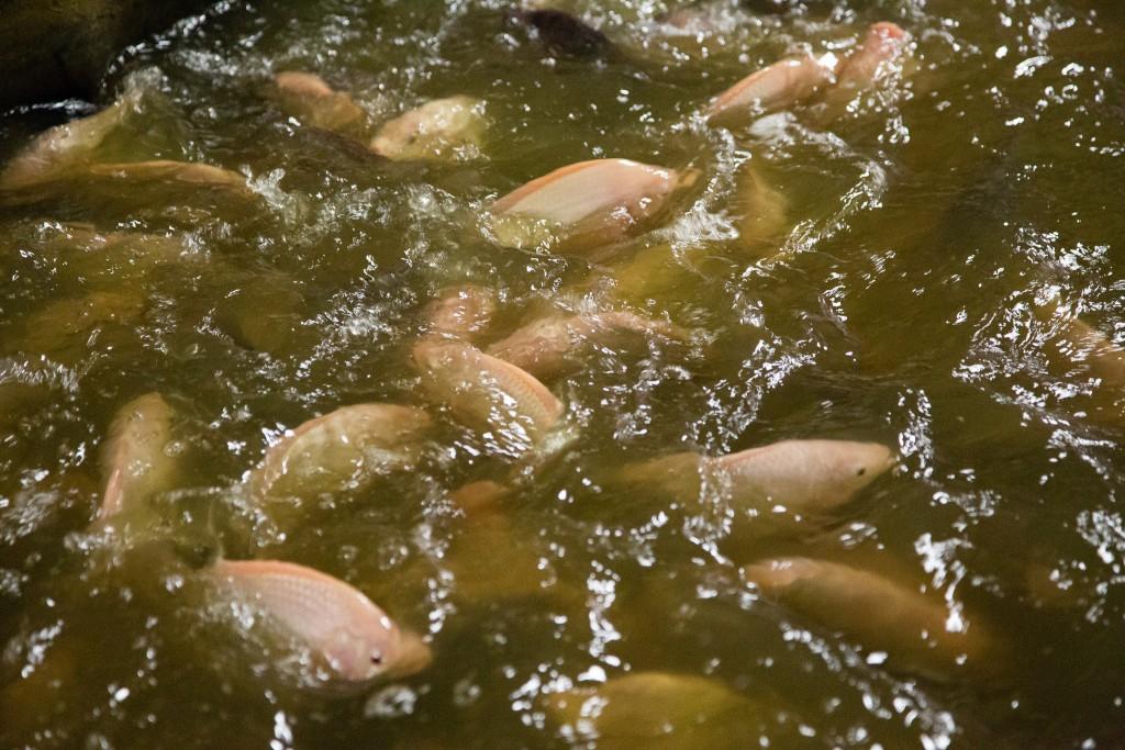 United Soybean Board Aquaculture