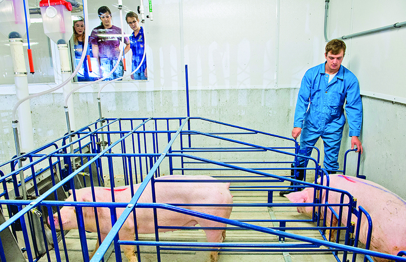 The new facility includes an observation room to give people of all ages a look into modern hog farming.